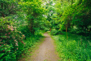 Walkway Lane Path With Green Trees in Forest. Beautiful Alley In Park. Pathway Way Through Dark Forest